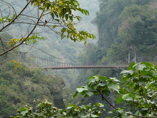 Suspension Bridge at Baiyang Trail