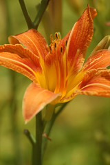 day lilly 10001
