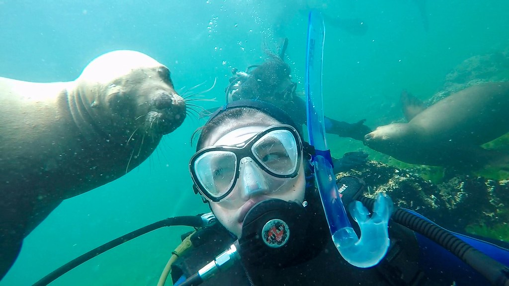 Diving with Sea Lions at Puerto Madryn, Argentina Jan 3 2017