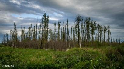Der Sumpfwald