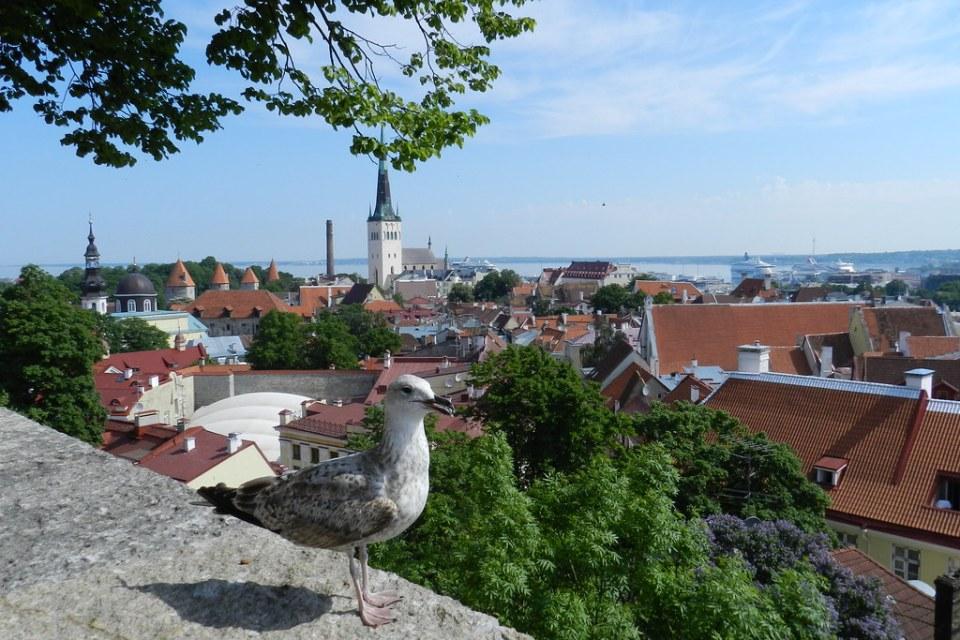 Vista desde Toompea Ciudad Alta Casco Histórico Tallin Estonia 05