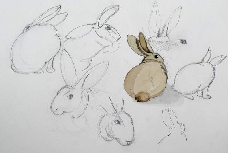 kaninchen