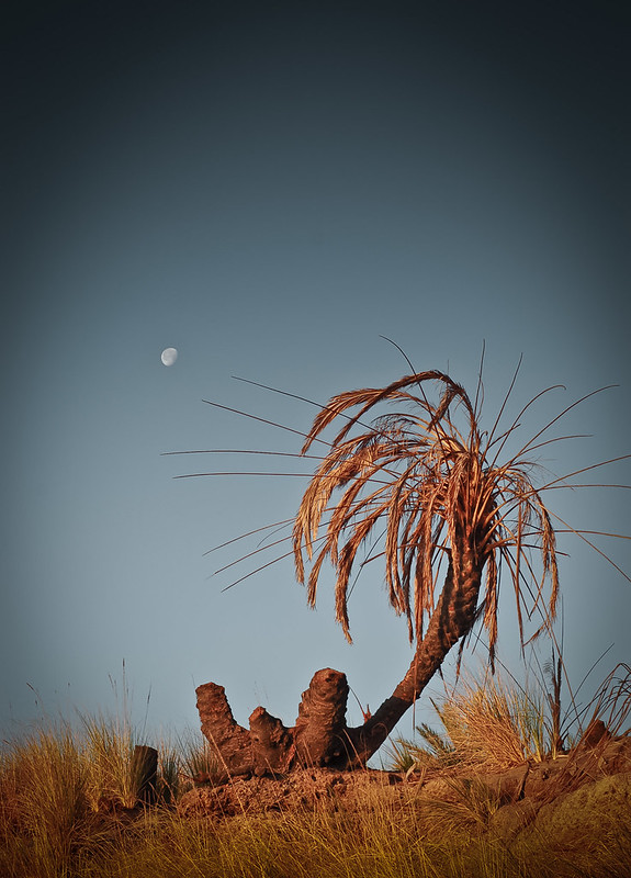 Moon and palm