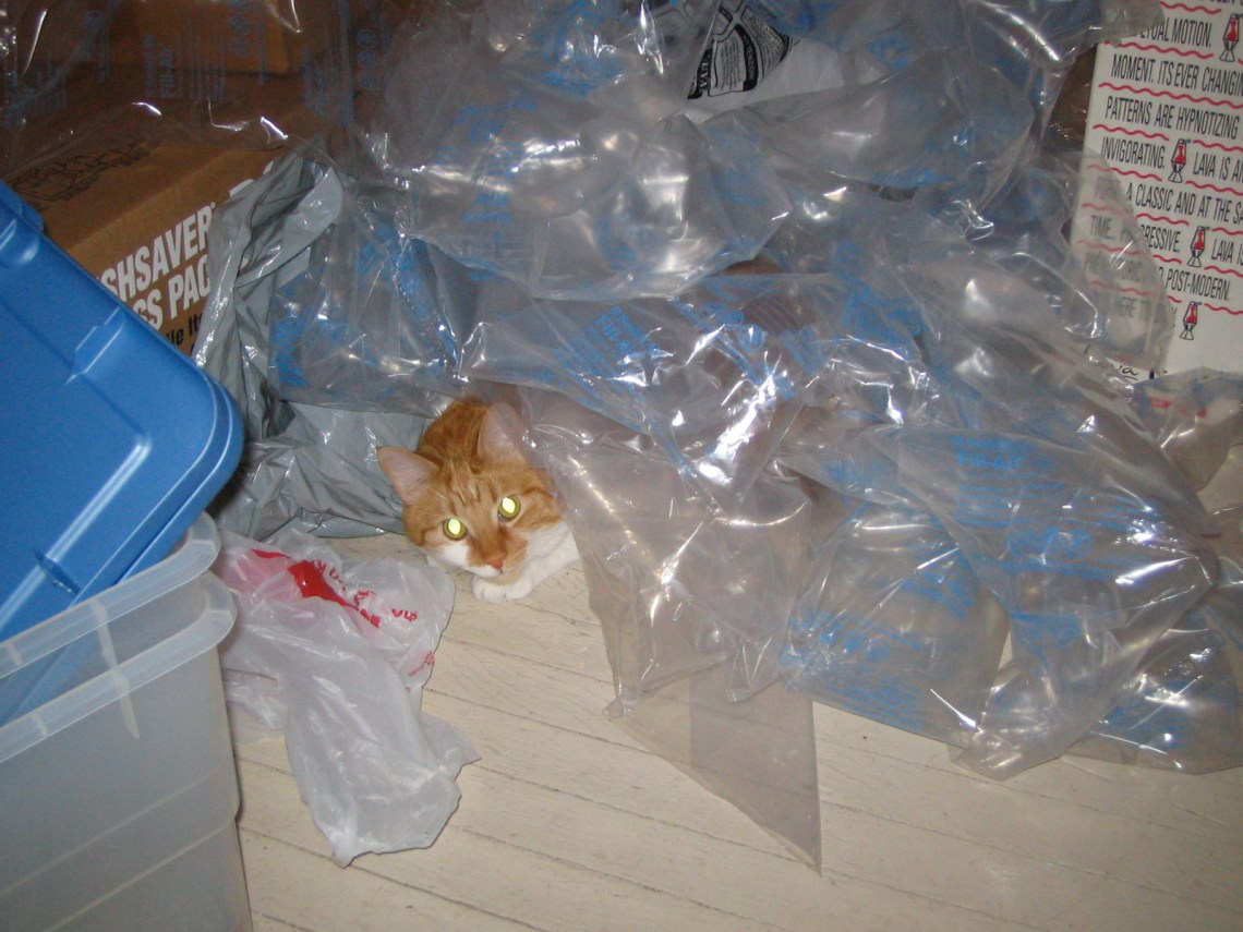Huckleberry hiding under packing materials