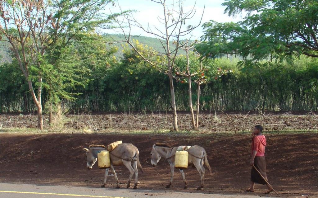 burros Medios de transporte Tanzania 10