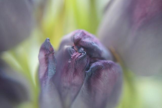 Med en enkel tulipan