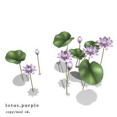 *NAMINOKE*Lotus deco. purple