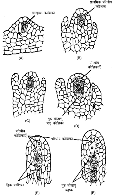 RBSE Solutions for Class 12 Biology Chapter 2 Q.3