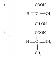 HSSLiVE Plus One Zoology Chapter Wise Previous Questions Chapter 4 Biomolecules 1