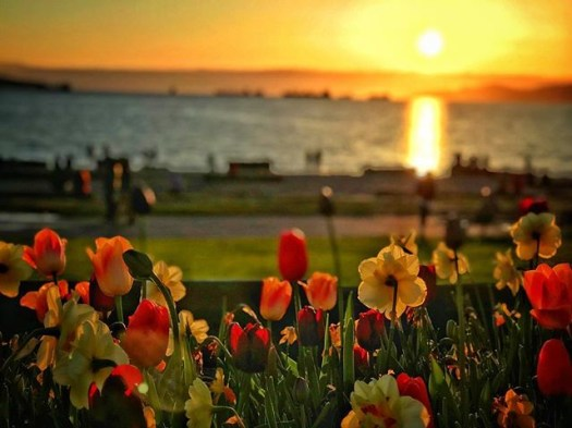 Springtime sunset in #englishbay. #veryvancouver #sunset #vancouver #vancouverbc #photos604