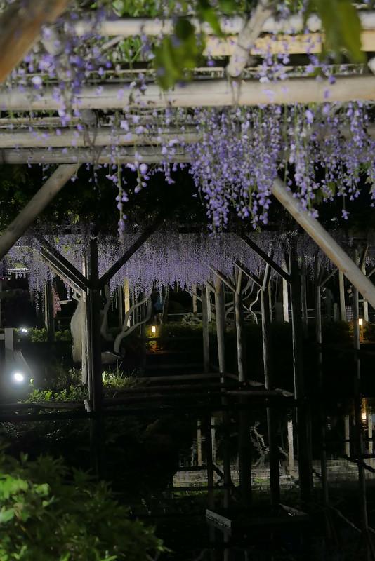 Kameido Tenjin Shrine wisteria festival 13