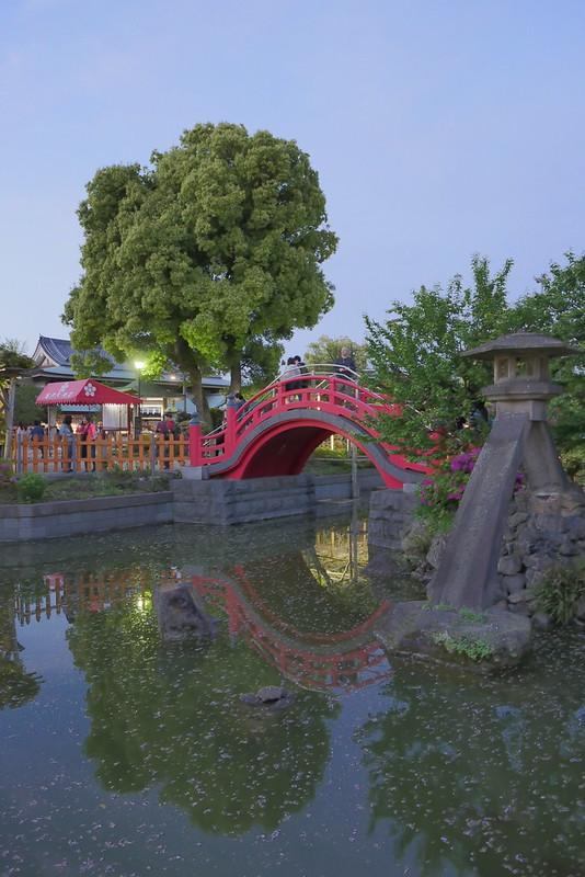 Kameido Tenjin Shrine wisteria festival 06