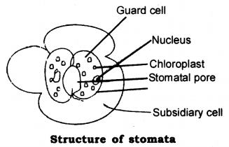 Life Processes Class 10 Notes Science Chapter 6 4