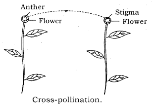 How do Organisms Reproduce Class 10 Notes Science Chapter 8 10