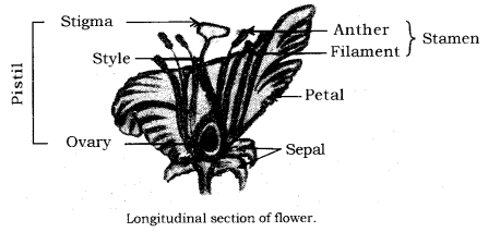 How do Organisms Reproduce Class 10 Notes Science Chapter 8 8