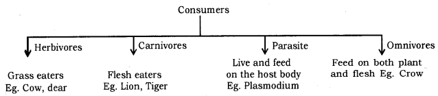 Our Environment Class 10 Notes Science Chapter 15 2