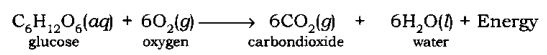 Chemical Reactions and Equations Class 10 Notes Science Chapter 1 3