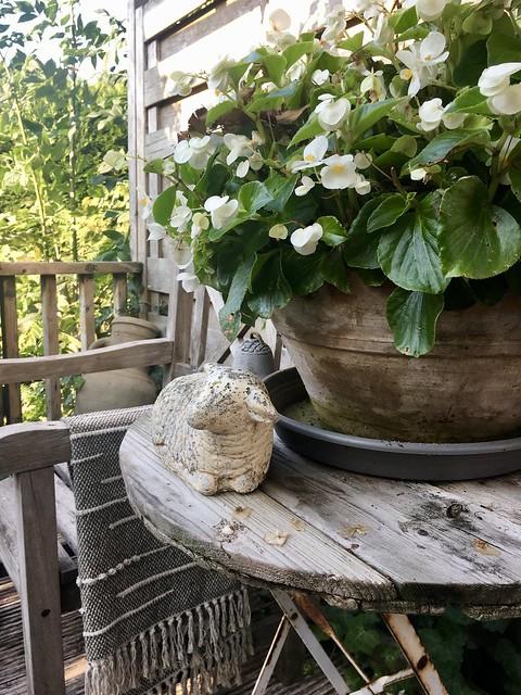 Plant met witte bloemen op houten tafeltje