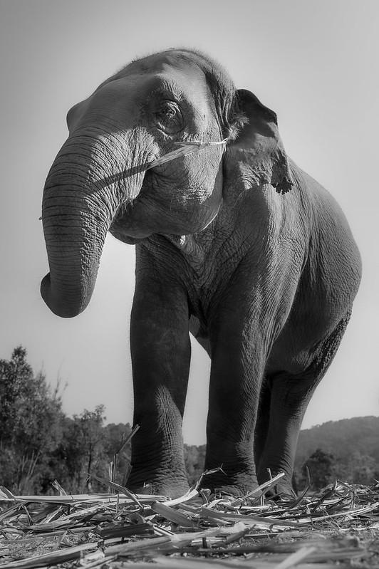 Chiang Mai / Elephant care - ตำบล แม่วิน, เชียงใหม่, Thaïlande - 18/02/2018 09h27