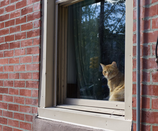 South Philly Window Tabby