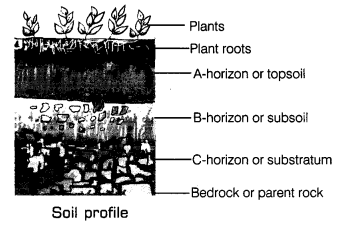 Soil Class 7 Notes Science Chapter 9