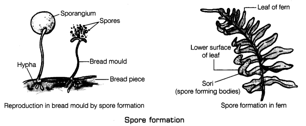 Reproduction in Plants Class 7 Notes Science Chapter 12