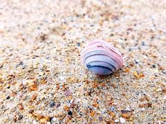 Perles de sable et coquillage d'Ostende