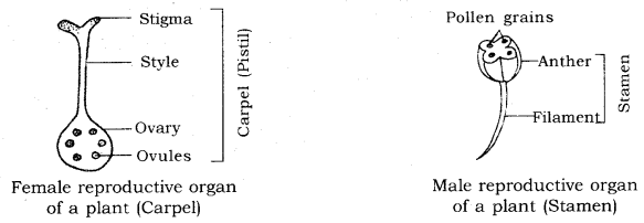 How do Organisms Reproduce Class 10 Notes Science Chapter 8 9