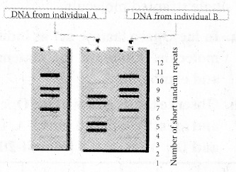 Plus Two Zoology Chapter Wise Previous Questions Chapter 4 Molecular Basis of Inheritance 8