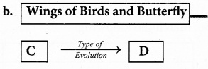 Plus Two Zoology Chapter Wise Previous Questions Chapter 5 Evolution 1