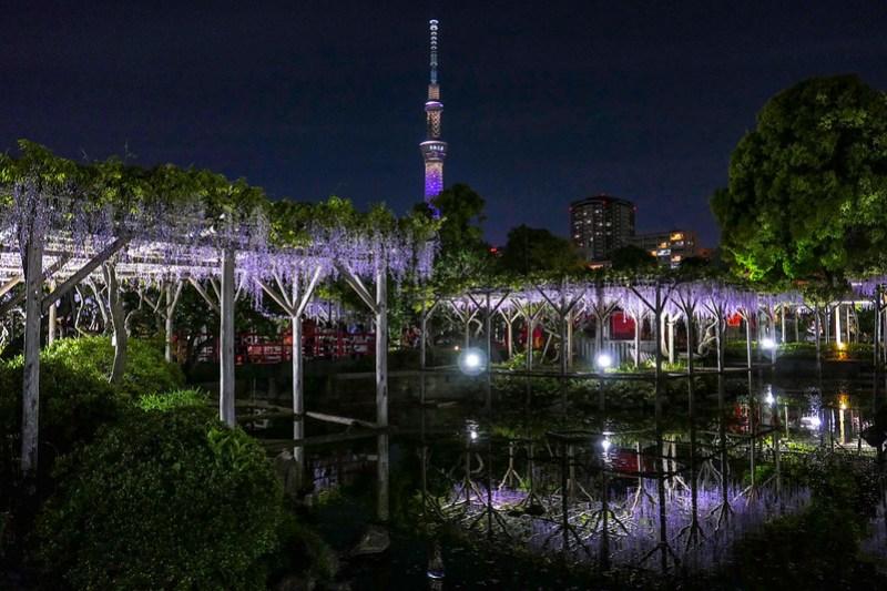 Kameido Tenjin Shrine wisteria festival 19