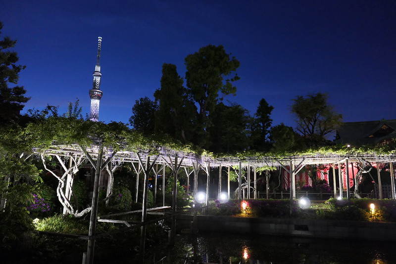 Kameido Tenjin Shrine wisteria festival 08