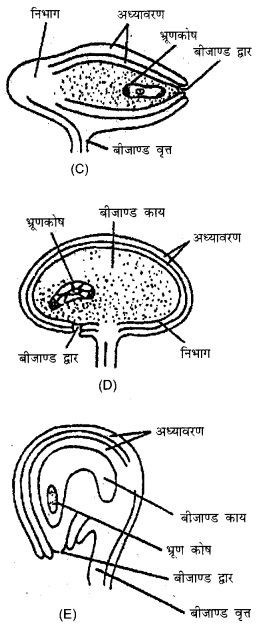 RBSE Solutions for Class 12 Biology Chapter 2 2Q.3.2