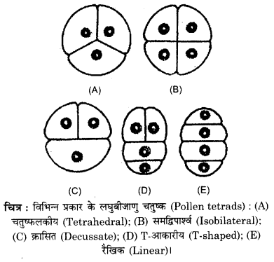 RBSE Solutions for Class 12 Biology Chapter 2 2Q.2