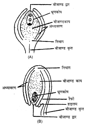 RBSE Solutions for Class 12 Biology Chapter 2 2Q.3.1