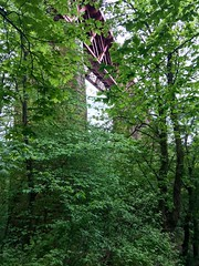 Forth Bridge Through the Trees