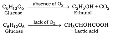 Life Processes Class 10 Notes Science Chapter 6 12