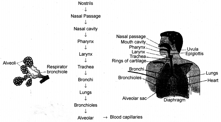 Life Processes Class 10 Notes Science Chapter 6 15