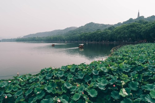 Lotus pond on the West Lake (西湖), Hangzhou