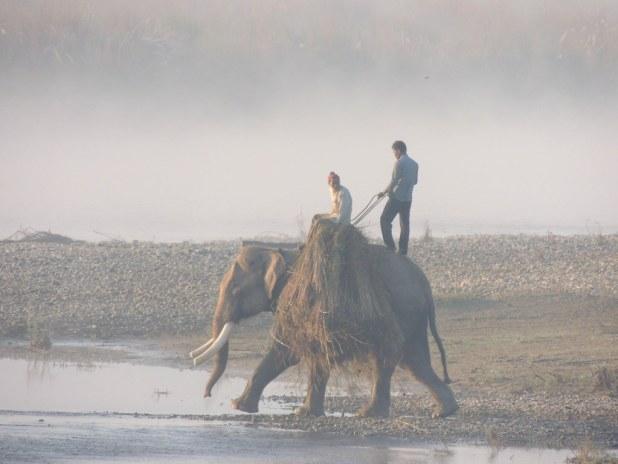 Elefantes en el Parque Nacional de Chitwan