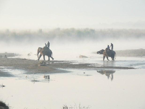 Elefantes cruzando el río en Chitwan