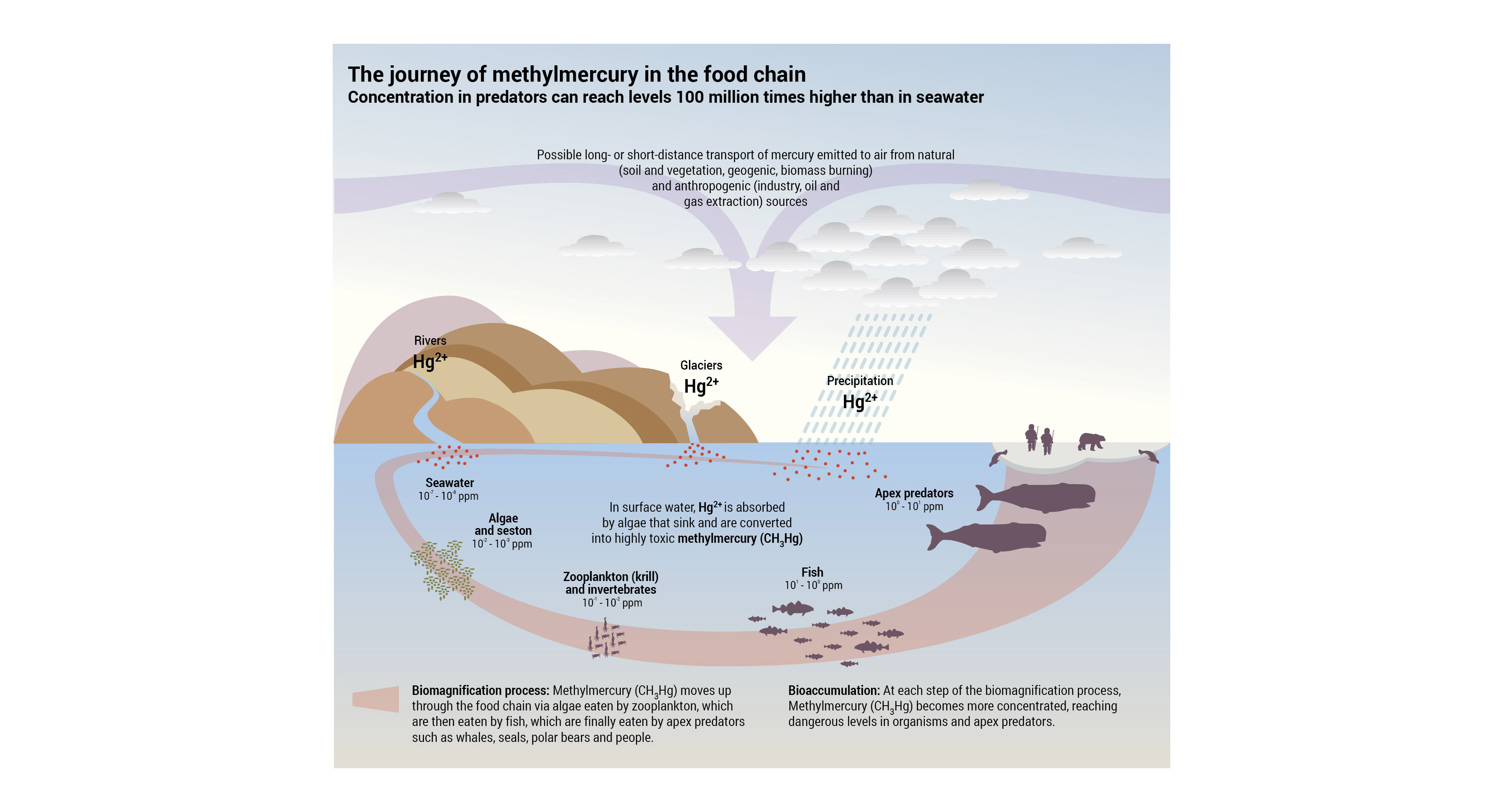 The Journey Of Methylmercury In The Food Chain