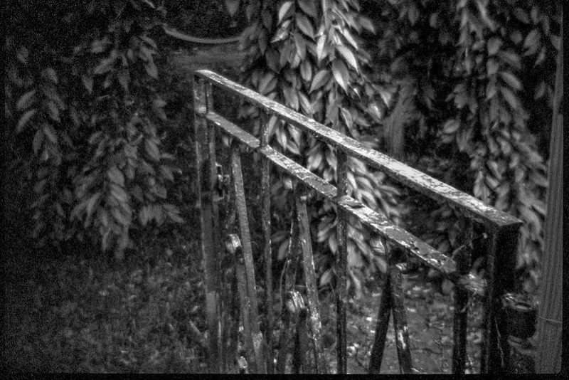 cast iron gate, rusted, front yard, neighborhood, Asheville, NC, Bencini 24S, Bergger Pancro 400, HC-110 developer, 5.28.19