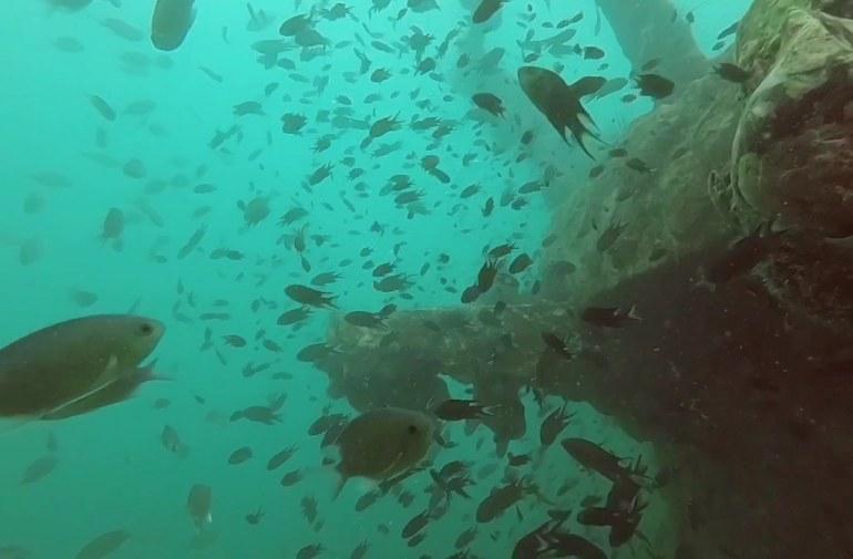 รอบๆ เรือหลวงปราบ พบเจอปลามากมายสีสันสะดุดตา