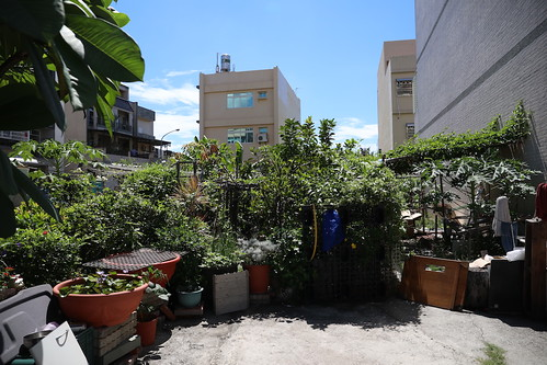 美玉姐的那塊地:菜圃變水果園