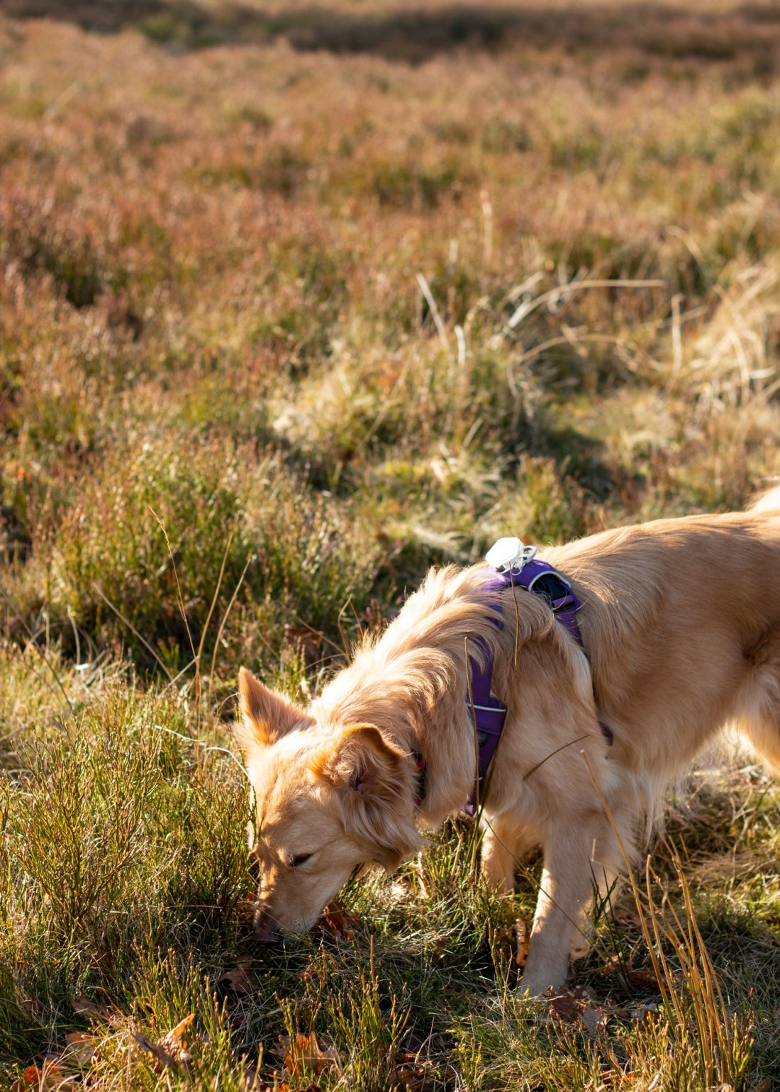 Peak-District-Walks-with-Dogs