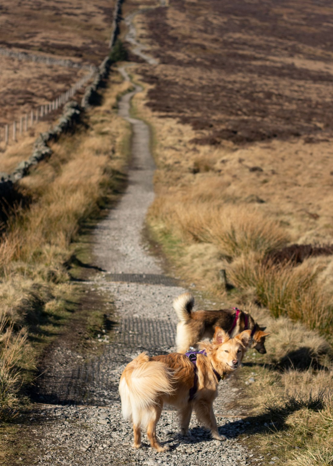 The-best-dog-walks-in-the-Peak-District