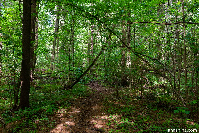 Бурелом в лесу