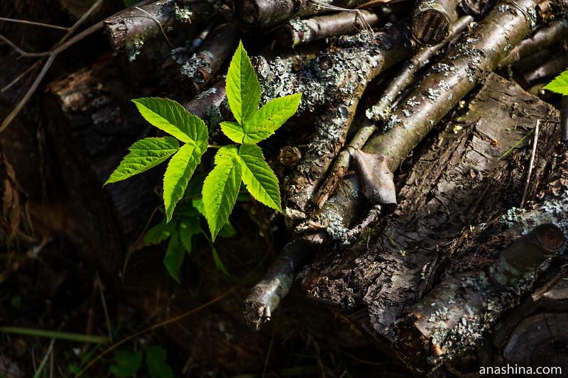 Старые дрова