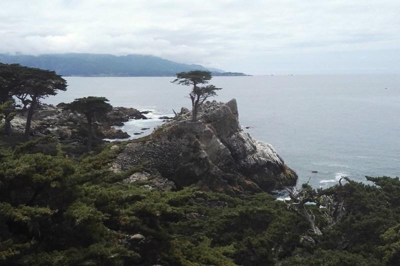 The Lone Cypress Tree, 17-Mile-Drive, California